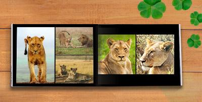 Premium photo albums